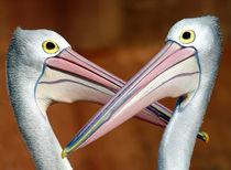 Duelling pelicans von Sheila Smart