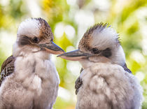 Pair of kookaburras von Sheila Smart