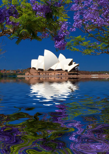 Opera-house-with-jacaranda-flood