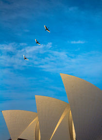 Sydney Opera House with ibis in flight by Sheila Smart