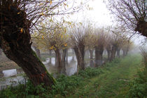 Herbstlandschaft mit Kopfweiden im Nebel 01 von Karina Baumgart