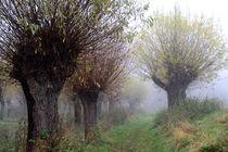 Herbstlandschaft mit Kopfweiden im Nebel 04 von Karina Baumgart