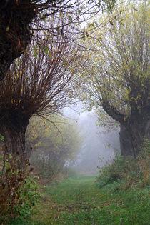 Herbstlandschaft mit Kopfweiden im Nebel 06 by Karina Baumgart