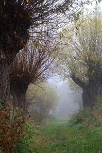 Herbstlandschaft mit Kopfweiden im Nebel 07 by Karina Baumgart