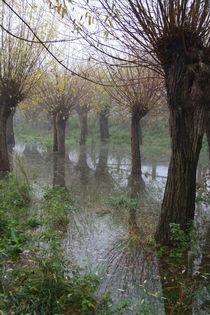 Herbstlandschaft mit Kopfweiden im Nebel 08 von Karina Baumgart