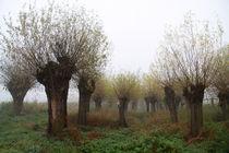 Herbstlandschaft mit Kopfweiden im Nebel 10 by Karina Baumgart