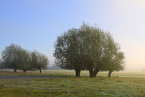 Herbstlandschaft mit Kopfweiden im Nebel 11 by Karina Baumgart