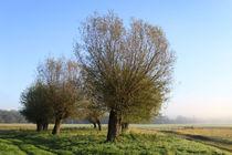 Herbstlandschaft mit Kopfweiden im Nebel 14 von Karina Baumgart