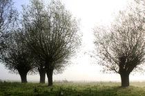 Herbstlandschaft mit Kopfweiden im Nebel 15 von Karina Baumgart