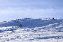 Eine Herde Rentiere in freier Wildbahn (04) von Karina Baumgart