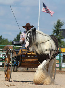 Gypsy Vanner Horse and American Flag von © Rooky Studios