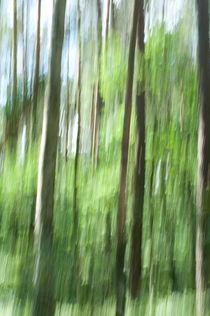 Waldspaziergang von Lisa Assimont