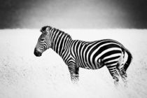 Stripes by Ralph Patzel