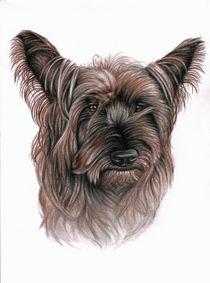 Australian Terrier by Nicole Zeug