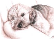 Dogs Eyes III von Nicole Zeug