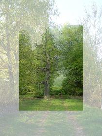 Toter Baum von Elke Balzen