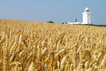 Lighthouse with Cornfield von aremak