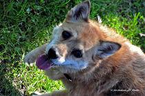 Junger Hund, Hunde, Freunde des Menschen von shark24