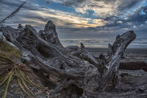 Dead tree at Greymouth Beach, South Island, New Zealand by Sheila Smart