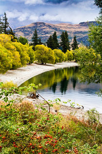 Glendhu Bay, Lake Wanaka, New Zealand by Sheila Smart