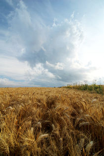 Cornfield with Thunder Cloud von aremak