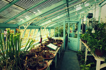 Greenhouse of Charles Darwin von aremak