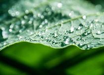 Raindrops on a leave von Lena Compaoré