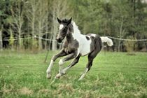 Frolicking Filly von © Rooky Studios