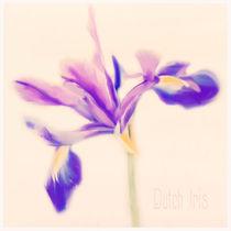 Iris Beauty von Linde Townsend