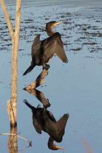 Spiegel von eifel-wildlife