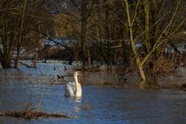 Hochwasser von eifel-wildlife