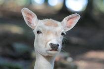 Kritischer Blick by eifel-wildlife