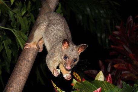 Australien-2012-42