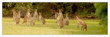 Australien-2012-405