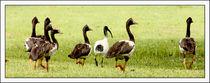 Undercover von eifel-wildlife