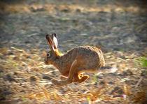 Rennen von eifel-wildlife
