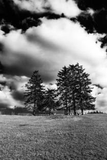 Trees von Ralph Patzel
