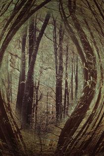 im Wald  von Barbara  Keichel