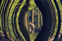 Pilzsammler  von Barbara  Keichel