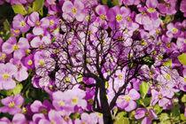 Blütenbaum  von Barbara  Keichel