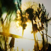 Summertime by Elena Laska