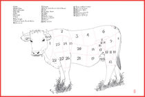Beef/Cow meat cuts diagram von saskia hampton
