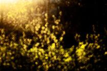 spring plants von Elena Laska