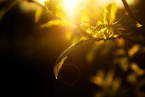 evening branches von Elena Laska