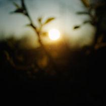 defocused evening branches  by Elena Laska