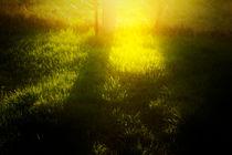 evening grass by Elena Laska
