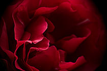 Imgp0986-intimacy