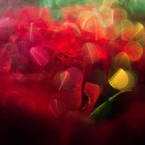 red roses by Elena Laska