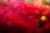 red roses von Elena Laska