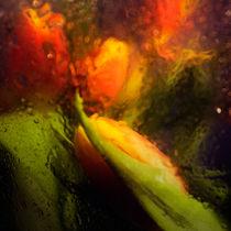 orange tulips by Elena Laska